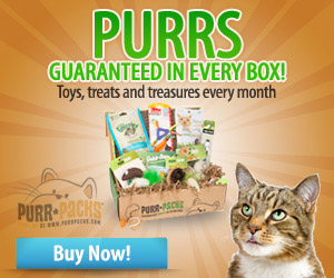 Purrs Box - Square