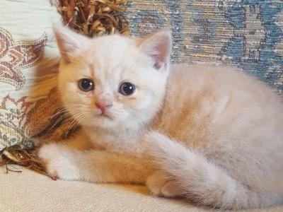 Male Kitten 0402