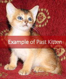 July 2017 Kittens