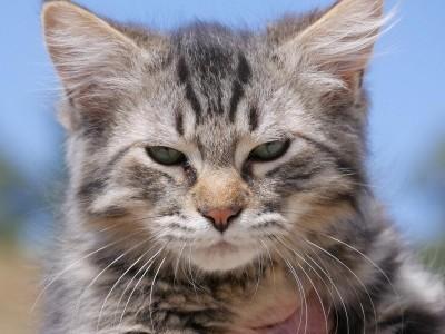 Kitten 1 Available Now