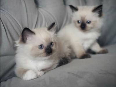 Rico and Bella